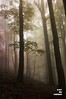 163 (Overtherainbow changes to KV Photography) Tags: wood mist halloween fog forest woodland dark landscape photography enchanted treesinfog