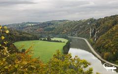 Nature d'automne (gus62320) Tags: nature automne eau belgium belgique arbre meuse feuille rivage rive freyr