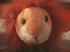 Leo (Ana Cristina A. Rocha) Tags: toys child lion objects objetos criana infancia leo brinquedos pelucia