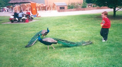 Stuart Elliot 1990s