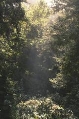 morninglight (Eri King) Tags: california morning camping trees light sunlight nature beauty landscape morninglight big hiking walk bigsur sur lospadresnationalforest kirkcreek