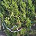 Trees_of_Loop_360_2013_056