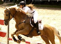 IMG_0041 (raphaelvianna) Tags: brazil horse brasil paulo cavalo so equestrian santo hpica amaro hipismo