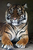 140214 Burgers' Zoo (JGOM) Tags: netherlands zoo arnhem nederland burgers burgerszoo dierentuin dierenpark burgersdierenpark