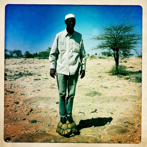 A man Is Standing On Top Of A Land Turtle Shell, Hargeisa, Somaliland