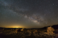 Milky Way over Devil's Cornfield (Jeff Sullivan (www.JeffSullivanPhotography.com)) Tags: death valley national park milky way timelapse deathvalley nationalpark california usa night landscape photography canon road trip jeff sullivan allrightsreserved photo copyright april 2014 weather clear stars devilscornfield caliparks deva airglow