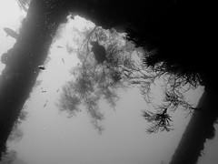 At the Liberty Wreck, Tulamben (yayapapaya77) Tags: bali fish indonesia liberty underwater diving fisch shipwreck wreck corals indonesien wrack tauchen unterwasser korallen tulamben libertywreck canonpowershotg15