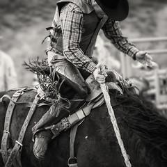hands and reins and horse. (Elizabeth Haslam) Tags: horse utah buffalo cowboy barns grandtetons mormons 2014 outbuildings grandtetonnationalpark buckingbronco mormonrow peoa moultonbarns mormonpioneer elizabethhaslam dirtyrottenbuckers utahcowboys tractorl