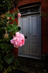 Malmö, June 19, 2015 (Ulf Bodin) Tags: street door flower rose se skåne sweden outdoor sverige malmö skånelän jacobnilsgatan