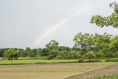 Assam_082 (SaurabhChatterjee) Tags: assam countryside guwahati httpsiaphotographyin india lakhimpur rural saurabhchatterjee siaphotography tea teagardens tezpur village