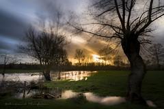 Dans le vent (Bertrand Thiéfaine) Tags: campagne prairie prairieinondée vent arbres branches eau d750 filtrend1000 filtrepolarisant herbe champ nuages soleil coucherdesoleil hiver reflets poselongue nikkor20mmf18