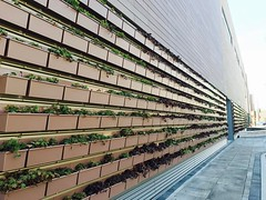 🌿 Outdoor green wall at the new @wholefoodschi Lakeview 🌿 (southportcorridorchicago) Tags: instagramapp square squareformat iphoneography uploaded:by=instagram southport southportcorridor chicago wrigleyville lakeview