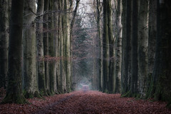 Alley II (MartinFechtner-Photography) Tags: alley tree trees forest nl netherlands niederlande grafschaft bentheim nordhorn wald allee winter bäume weg path baum holz