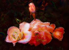 Five Phases (bethrosengard) Tags: bethrosengard photomanipulation digitallyenhanced photoart digitalmagic digitalart