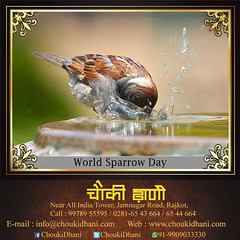 World Sparrow Day | Resort in Gujarat | Hotel in Rajkot (ChoukiDhani) Tags: worldsparrowday wishing birlds sparrow love save animal water food resort motelinrajkot hotelinrajkot familyrestaurant