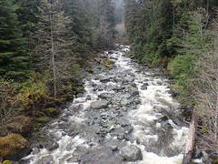 What I'm Working On Today (Dru!) Tags: tsitika forest hydrology catherinecreek vancouverisland insularranges bc britishcolumbia canada