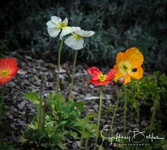 Flowers-6412