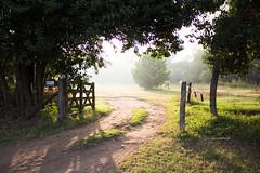365-84 (Letua) Tags: verde paisaje campestre tranquera niebla vegetacion camino arboles landscape green trees fog gate pathway throughherlens