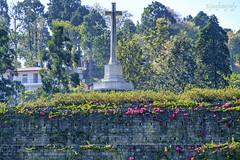 War Cemetery 5 ... (Bijanfotografy) Tags: fuji fujifilm fujifilmxe1 fujifilmxc50230 xtrans nagaland kohima kohimawarcemertery warcemetery warmemorial india northeastindia