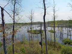 Wetland (one.juniper) Tags: park ontario canada beach nature water sunshine weekend wildlife may naturepreserve lakehuron provincialpark daytrip wetland portelgin saugeenshores victoriaday longweekend macgregorpoint brucecounty staycation