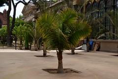 HIVERNACLE DEL PARC DE LA CIUTADELLA (Yeagov C) Tags: barcelona catalunya parc ciutadella parcdelaciutadella 2013 hivernacle