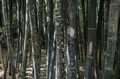Bamboo Graffiti. (Spencer Wilton) Tags: africa graffiti desert bamboo morocco marrakech yvessaintlaurentgarden