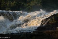 The Nile - Murchison Falls, National Park, Uganda (Hans Olofsson) Tags: afrika murchinsonfalls nationalpark nature uganda nile nilen falls water waterfalls ecotourism thenile