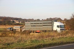 Mitsubishi Pickup and trailer and DAF XF artic lorry (Ian Press Photography) Tags: truck cow suffolk cattle cows farm farming transport pickup lorry trucks trailer artic mitsubishi daf lorries xf brantham