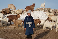 MONGOLIA Bayarmaa Baljinnyam's youngest daughter with the family's goat herd