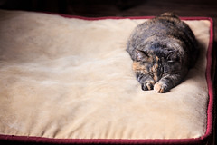 Lazy Labour Day (wendy74ca) Tags: cat indoor lu