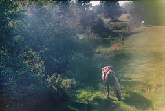 Horse (m.kamiński) Tags: light summer horse sunlight holiday tree green nature animal analog landscape outside countryside scenery village outdoor farm country poland summertime zenit analogue magical glade