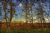 Flatlands (Bigshot Photographer) Tags: memoriesbook