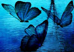 Frozen (etva101) Tags: texture photomanipulation butterflies 13 vividimagination sharingart awardtree treatthis