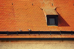 In Heat (Manol Z. Manolov) Tags: roof building architecture germany pigeon ingolstadt europebird