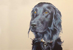 Dog - Flat Coated Retriever (sarahspellerart) Tags: portrait dog pet black cute art animal painting puppy fur long paint artist brush canvas oil flatcoat flattie sarahspellerart