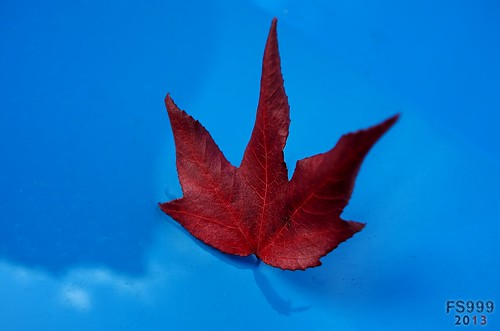 Red Leaf on my Car