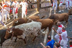 "6toros San Fermín Festival Pamplona 2013, Spain-4 <a style=""margin-left:10px; font-size:0.8em;"" href=""http://www.flickr.com/photos/116167095@N07/12268360605/"" target=""_blank"">@flickr</a>"