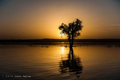 L'arbre  - The tree (DeGust) Tags: africa sunset sky orange sun color tree water yellow niger night ro jaune river landscape noche soleil twilight agua nikon eau wasser sundown nacht couleurs paisaje ne amarillo ciel gelb westafrica afrika dmmerung paysage crpuscule landschaft farbe nuit arbre westafrika pnombre fleuve afrique crepsculo coucherdusoleil nigerriver  ner  zwielicht vueextrieure exteriorview afriquedelouest fleuveniger d700   nikkor2470mmf28 011600  ronger  gustavedeghilage