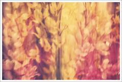 Abstract Spring (Malte B.) Tags: plant flower green leaf spring pflanze grn blume blatt bunt abstrakt frhling mitzieher