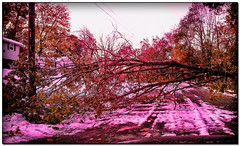 Trees falling. Look out. (Pentax K-x Connecticut Man) Tags: street winter usa house snow colour photoshop focus adobephotoshop connecticut newengland cellphone ct driveway plowed earlywinter cs6 cellphonephotographer topazadjust samsunggalaxys lightroom4 adobelightroom44