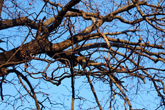 Tangle Above (KerryElise07) Tags: above winter tree up chaos dof bare branches layers limbs tangle chillywarmth