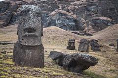 Moais at Rano Raraku (c3nes) Tags: sculpture rock stone moai easterisland rapanui isladepascua ranoraraku