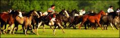 La madrina lobuna (Eduardo Amorim) Tags: horses horse southamerica argentina criollo caballo cheval caballos cavalos pferde herd cavalli cavallo cavalo gauchos pferd pampa hest hevonen chevaux gaucho  amricadosul beijos hst gacho  campero amriquedusud provinciadebuenosaires  gachos  sudamrica sanantoniodeareco suramrica amricadelsur  areco sdamerika gregge crioulo troupeau caballoscriollos herde criollos  tropillas  pampaargentina camperos americadelsud tropilhas tropilla buenfinde  crioulos cavalocrioulo americameridionale tropilha caballocriollo campeiros campeiro eduardoamorim cavaloscrioulos pampaargentino
