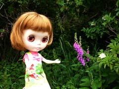Dagmar Gina found some foxgloves!