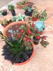 IMG_20170304_075501 (Rodrigo Ribeiro) Tags: nature natureza garden gardening jardim jardinagem flor flores flower backyard
