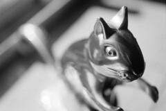 bug-eyed squirrel (Mattron) Tags: blackandwhite bw blancoynegro noiretblanc film analog filmisnotdead d76 apx100 diy handprocessed nikonf3 55mmmacro squirrel nutcracker macro