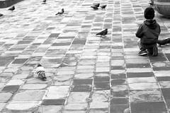 Feed the Birds 2 (CameraCat.) Tags: canon canon550d krakow cracow poland warsaw city monochrome blackandwhite birds boy street candid