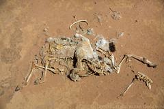 Somaliland_Mar17_0711 (GeorginaGoodwin) Tags: georginagoodwingeorginagoodwinimageskenyakenyaphotojournalistkenyanphotojournalist kenyaphotographer eastafricaphotographer kenyaphotojournalist femalephotographer idps refugees portraits portraitphotographer canon canon5dmarkiii canonphotos drought famine somalia somaliland malnutrition foodsecurity donorfunding aid foodaid wash health sanitation hornofafrica