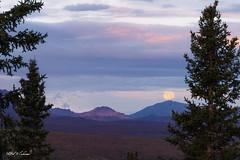 Moonset On The Alaskan Peaks_20A6930 (Alfred J. Lockwood Photography) Tags: alfredjlockwood nature landscape moonset twilight dawn denalinationalpark alaskarange savagerivercampground layers mountains spruce summer alaska