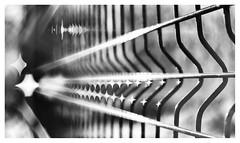 Fence (leo.roos) Tags: fence fencing hek hekwerk waterhousestop waterhousediaphragm waterhouseapertureplate diamond ruit noiretblanc a7rii lomographydaguerreotypeachromat6429 darosa leoroos